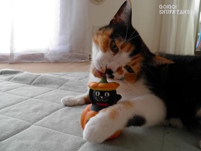 黒猫さんを可愛がってみたり