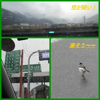 kani2_20121202213613.jpg