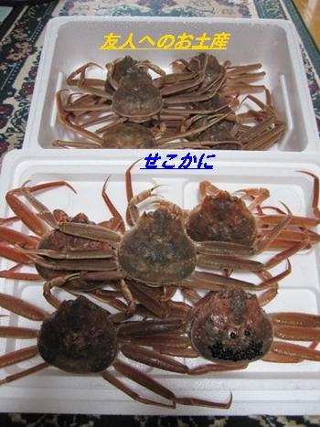 kani8_20121202213850.jpg