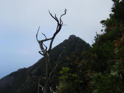 神山からのもっちょむ