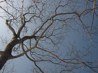 20110226生杉 018