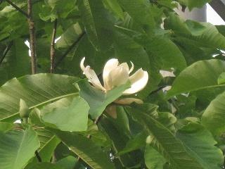 20110521生杉 006