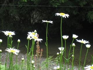 20110528生杉 041
