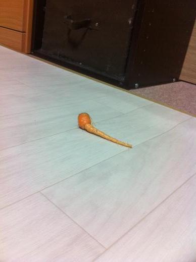 carrot11