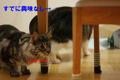 2010-10-05 2010-10-09 001 036
