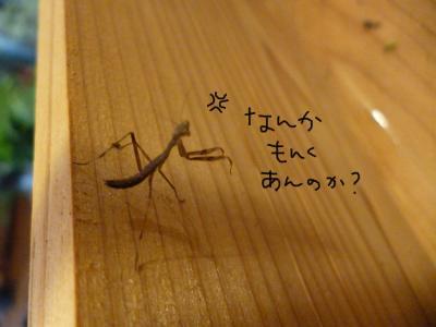縺九∪縺阪j_convert_20120703163704