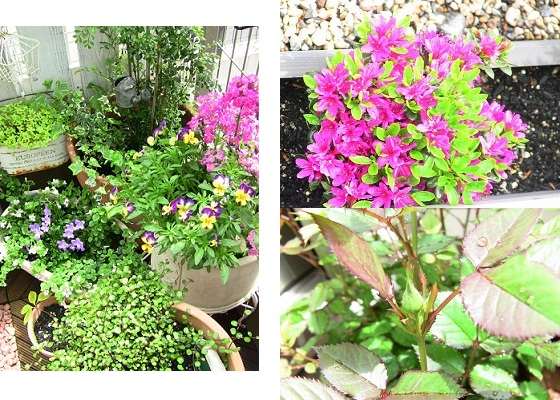 3つのお花たち写真
