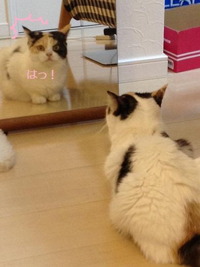まめと鏡2