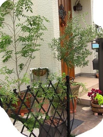 玄関脇の庭2