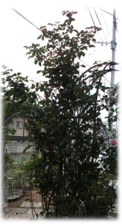 akibaraFC1.jpeg