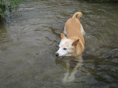 momo in river