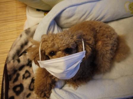 風邪引きました