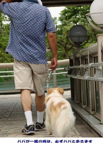 2010_0728_komugi_1.jpg
