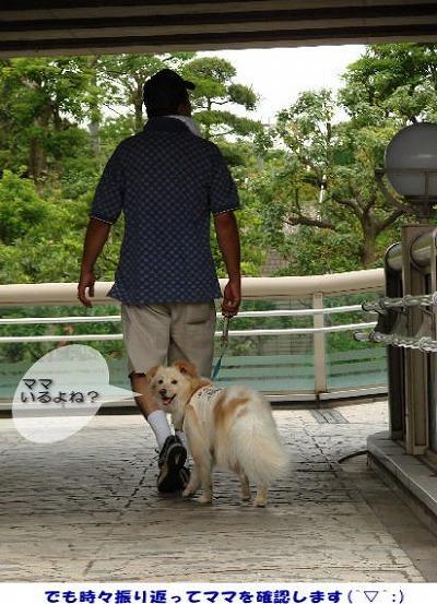 2010_0728_komugi_2.jpg