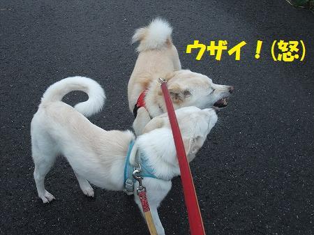2010_0909_6.jpg