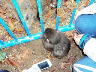 福井動物園