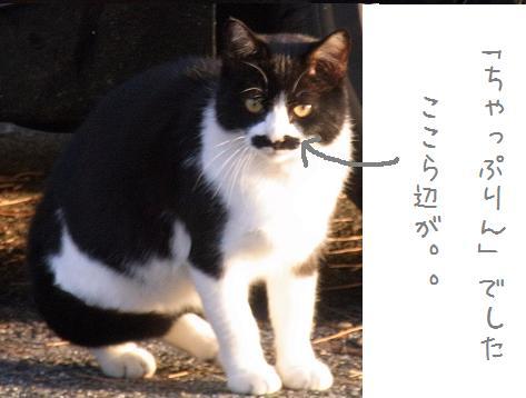 1110 ぷりんちゃんの理由 (1)