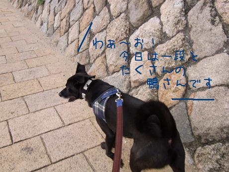 1110 ぷりんちゃんの理由 (2)