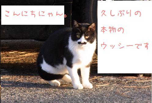 1110 ぷりんちゃんの理由