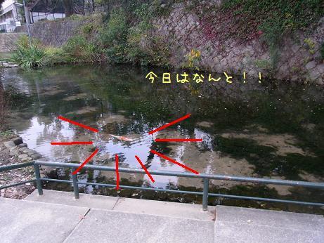 1117 見つからない魚03