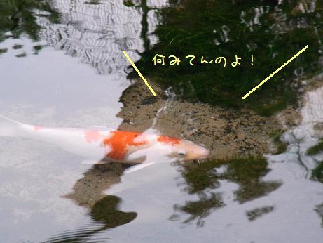 1117 見つからない魚04