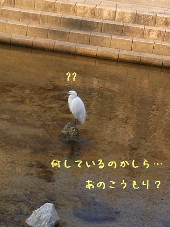 1124 何に似ているか? (8)