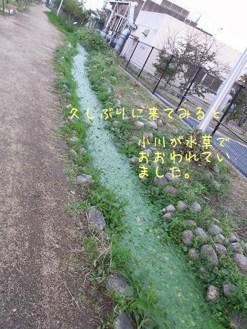 覚醒?(4)