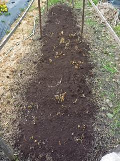 土が減ってきたのでバーク堆