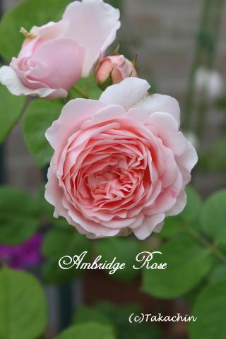 embridge12-02
