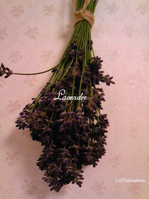 lavender12-01