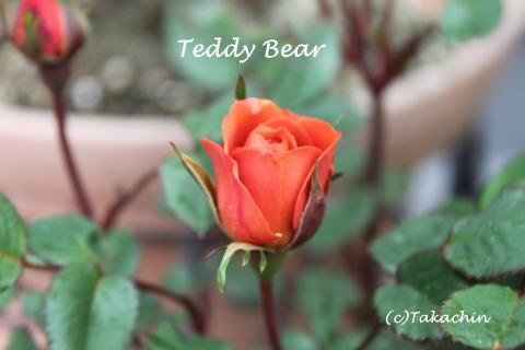 teddy02