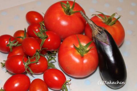 tomato12-01