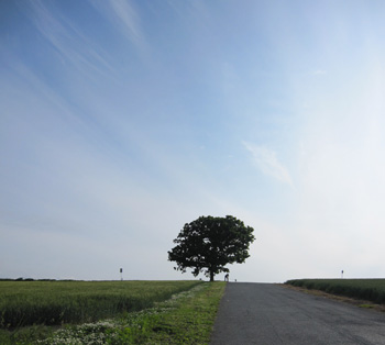 h0812.jpg