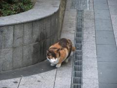 円町駅とその周辺_05_2010-10-27