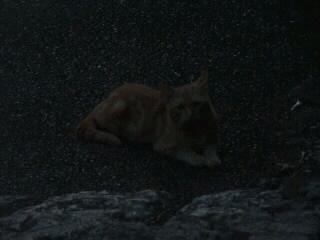 船岡山_04_2010-09-10