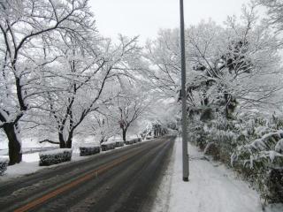 賀茂川の雪_01_2010-12-31