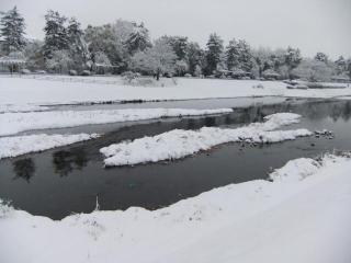 賀茂川の雪_04_2010-12-31