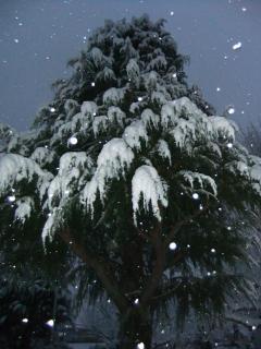 深泥池児童公園の雪_02_2010-12-31X
