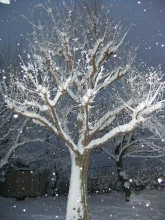 深泥池児童公園の雪_03_2010-12-31X