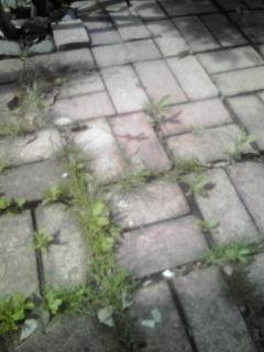 20100710092706.jpg