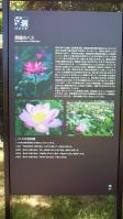 NEC_0610.jpg