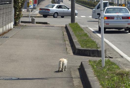 sutasuta_20110423123239.jpg