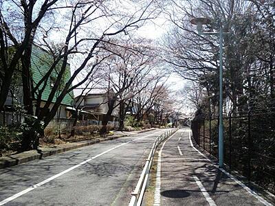 20110405-1.jpg