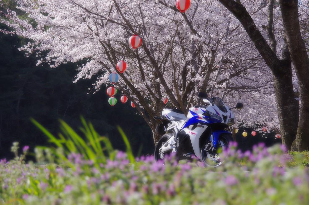 桜とCBR600RR