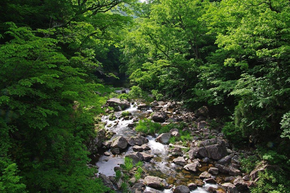 新緑の柴木川