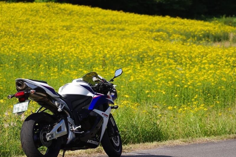 バイクと黄色い花