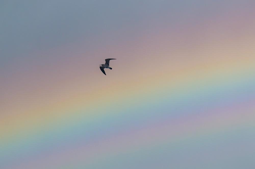 虹の中を飛ぶ