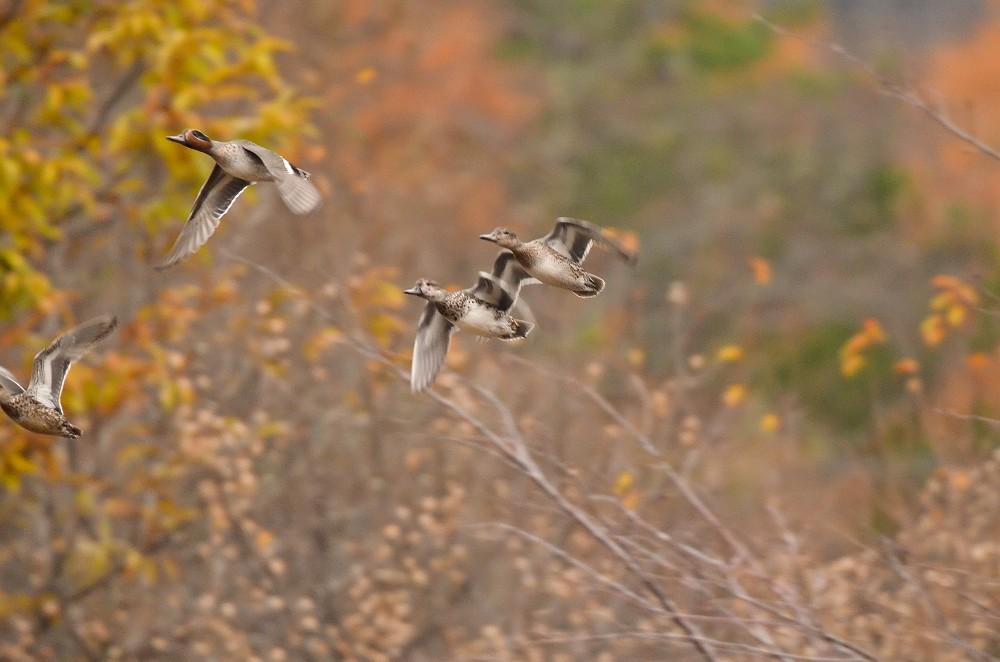 晩秋を飛ぶ