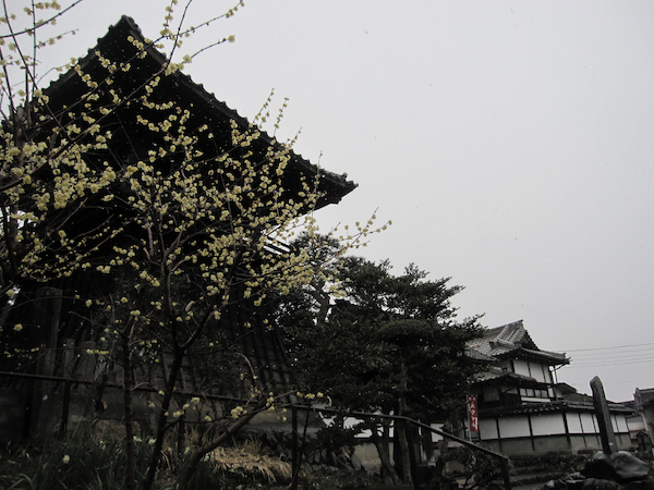 2011.02.16IMG_2635[1]