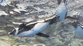 penguin_img02.jpg